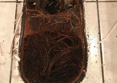 Root Removal From Plumbing – Rancho Cordova, CA